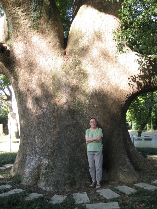 Very big tree